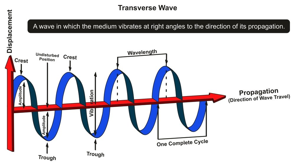 Transverse Wave Infographic Diagram showing structure with displacement and propagation axis with all parts(udaix)s