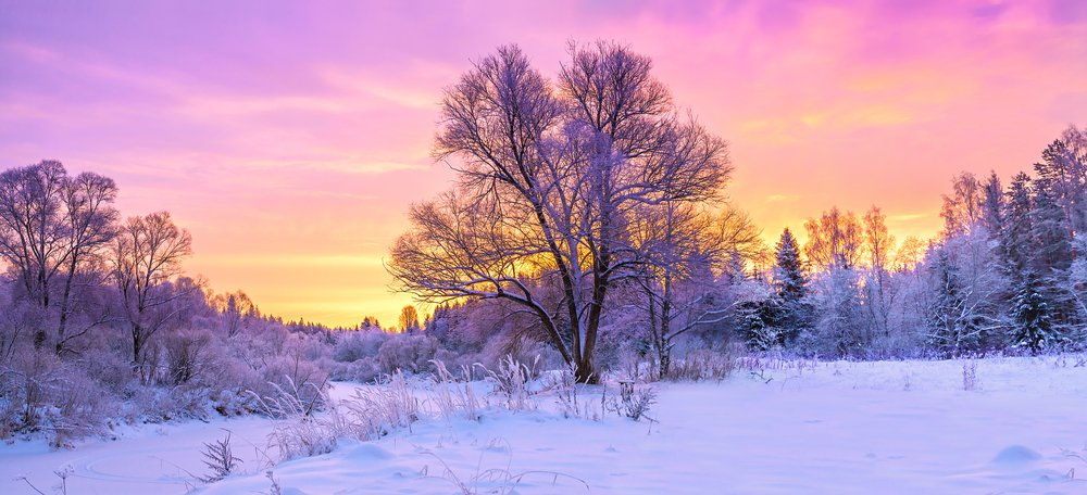 winter panorama landscape with forest, trees covered snow and sunrise. winterly morning of a new day(yanikap)s