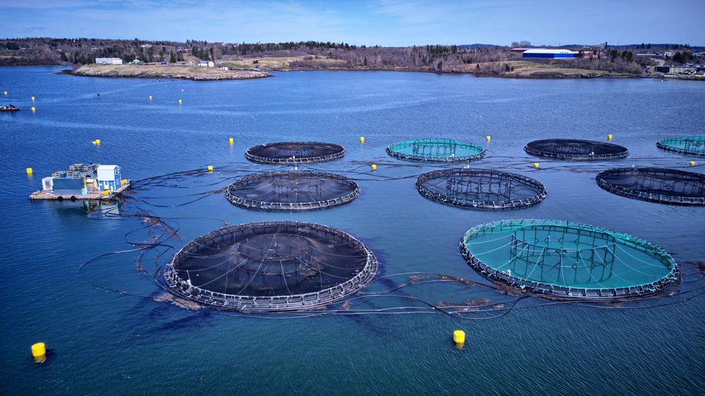 Atlantic salmon aquaculture cage site - Image(leo w kowal)s