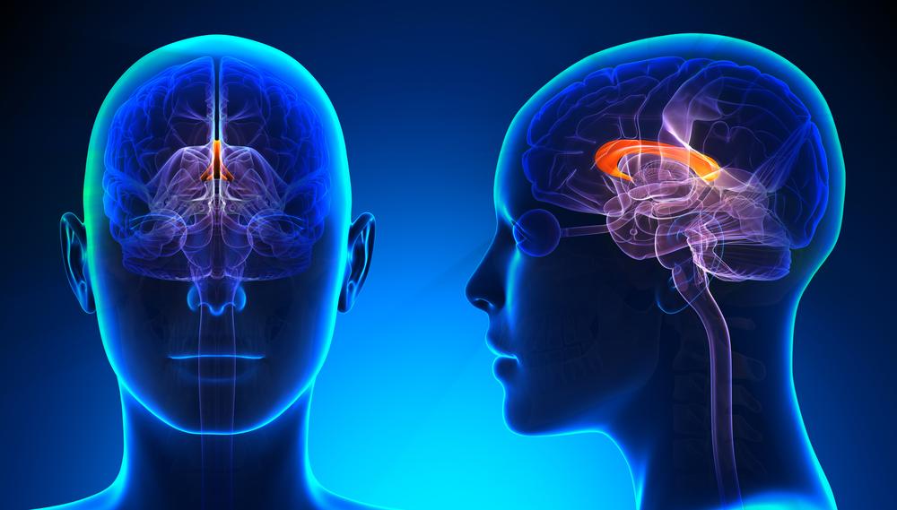 Female Corpus Callosum Brain Anatomy - blue concept - Illustration( decade3d - anatomy online)s