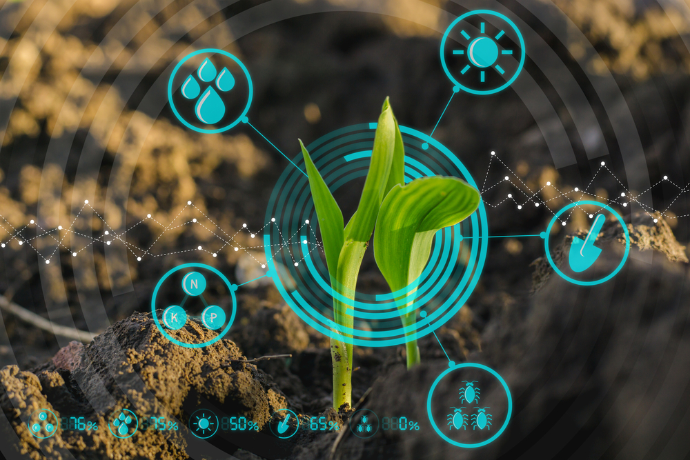 Growing young maize seedling in cultivated agricultural farm field with modern technology concepts(Lamyai)s
