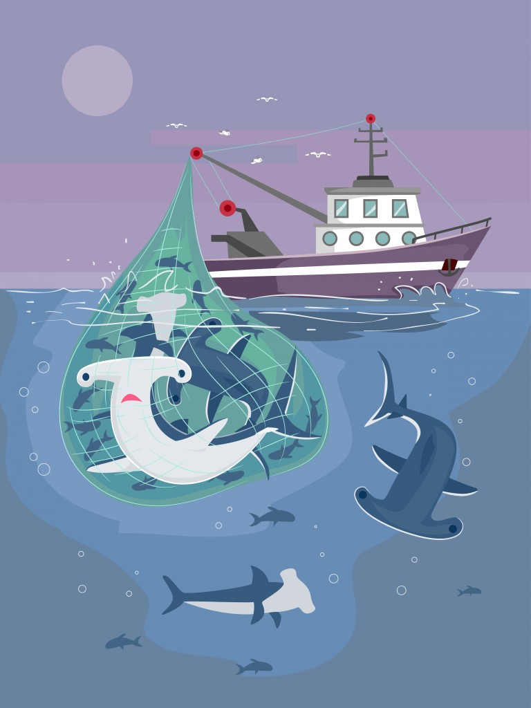 Illustration of Fishing Boat Catching Hammerhead Sharks - Vector( Lorelyn Medina)s