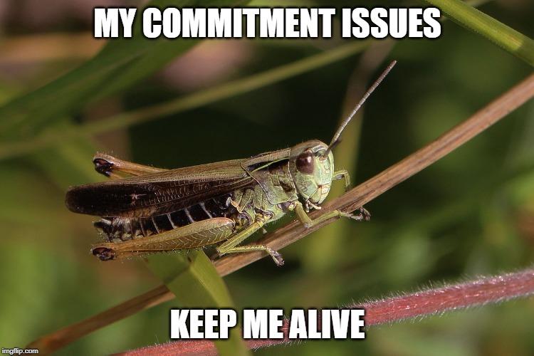 Grasshopper Meme