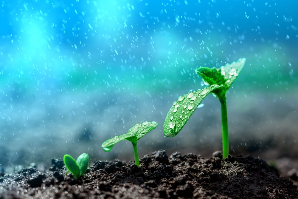 Vintage seedling growing on the ground in the rain. - Image(vovan)s