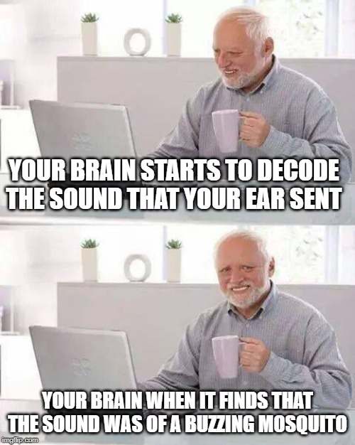 hide the pain harold meme: your brain starts to decode the sound that your ear sent