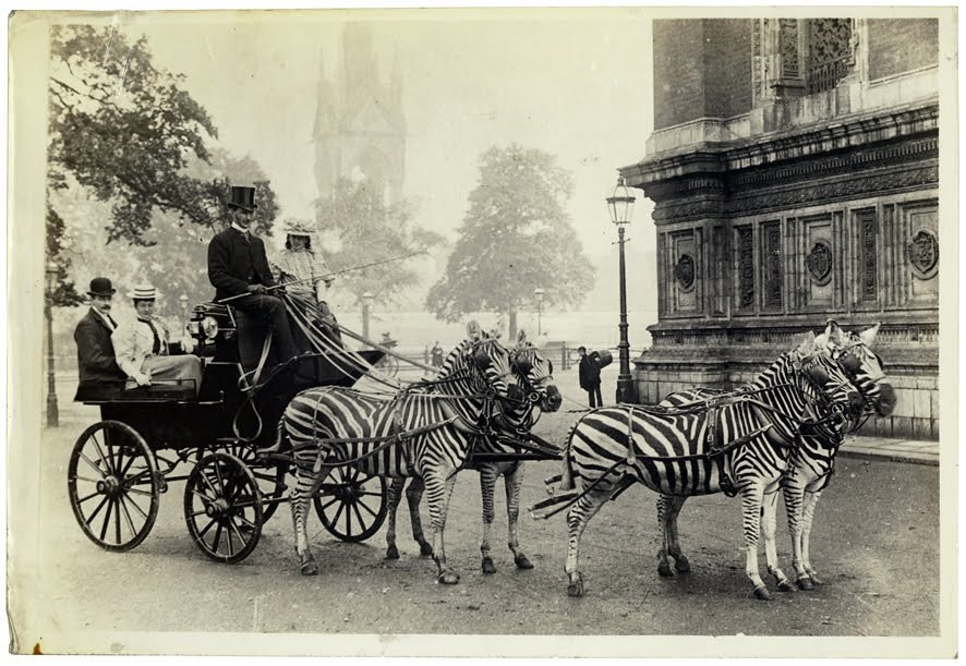 zebra carriage