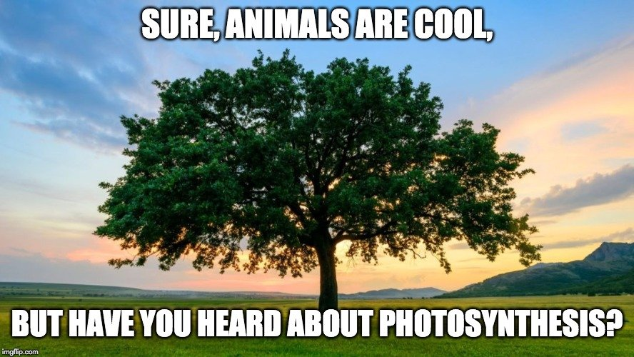 sure animals are cool meme