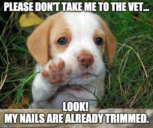 please dont take me to the vet meme