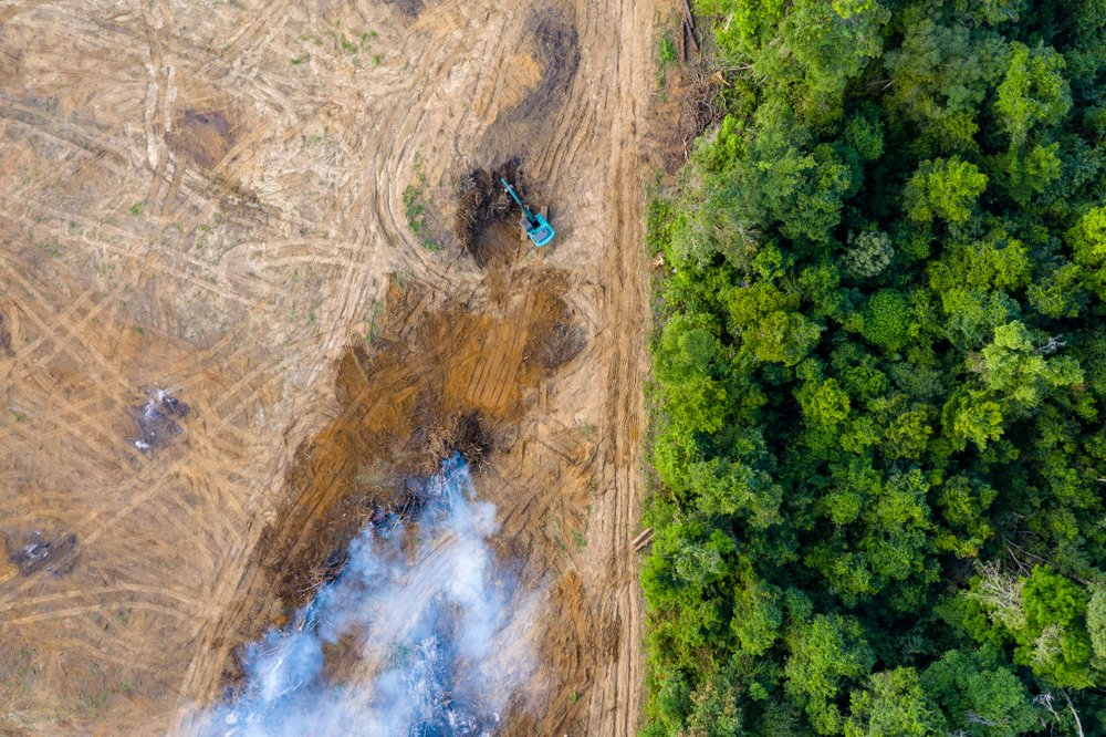 Aerial view of deforestation( Richard Whitcombe)s