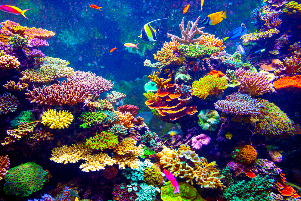 Coral Reef and Tropical Fish in Sunlight. Singapore aquarium( Volodymyr Goinyk)s