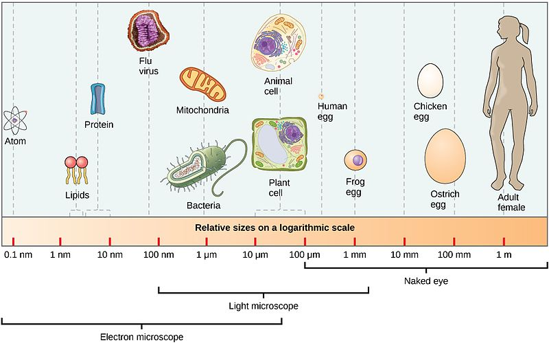 The nanometer scale
