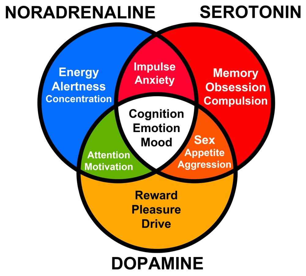 functions of different hormones like serotonin, dopamine and noradrenaline(desdemona72)s