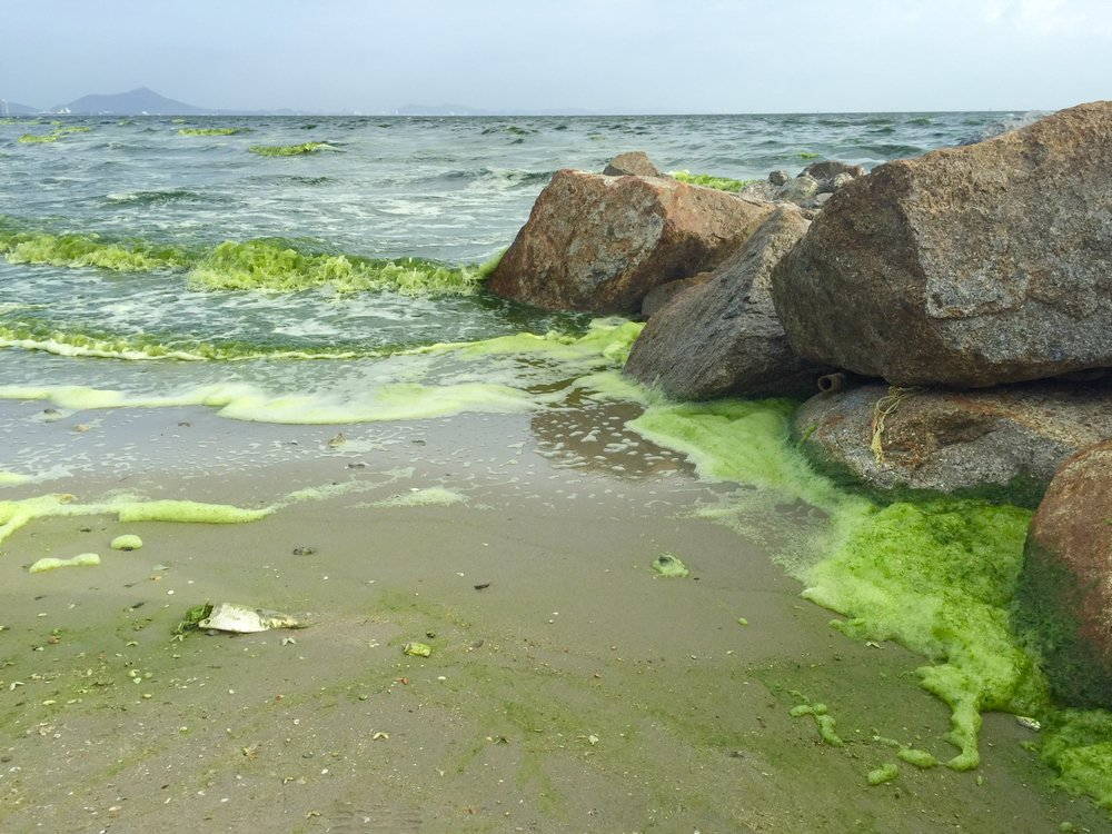 green sea caused by phytoplankton at Bangsaen, Thailand - Image(onsuda)s