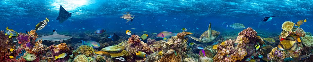 underwater coral reef landscape super wide banner background in the deep blue ocean with colorful fish( stockphoto-graf)s