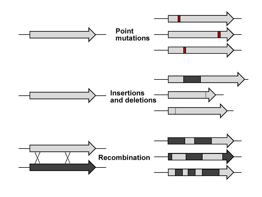 DE Mutations