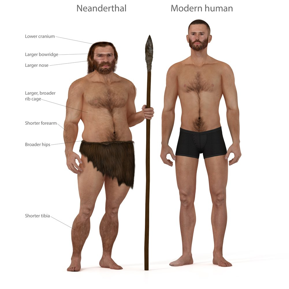 Digital illustration and render of a Neanderthal man(Nicolas Primola)s