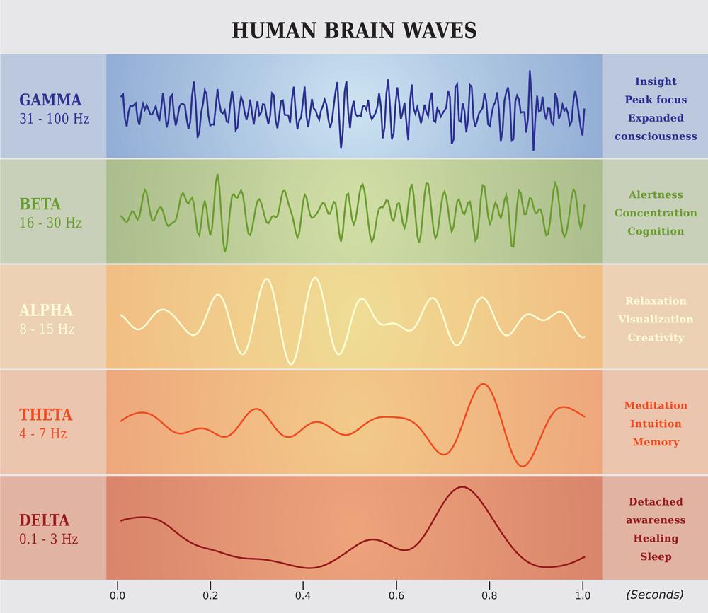 Human Brain Waves Diagram in five Colors(artellia)s