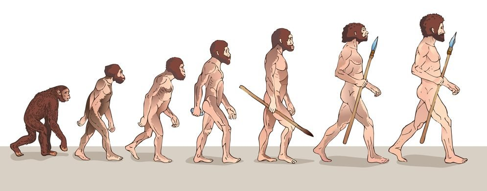 Human Evolution Illustration( Usagi-P)s