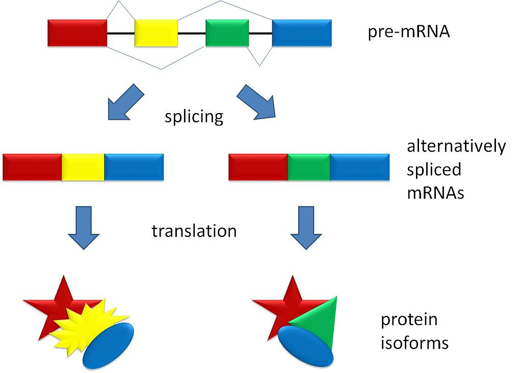 Splicing overview