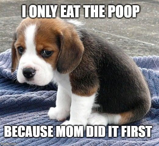 i only eat poop meme