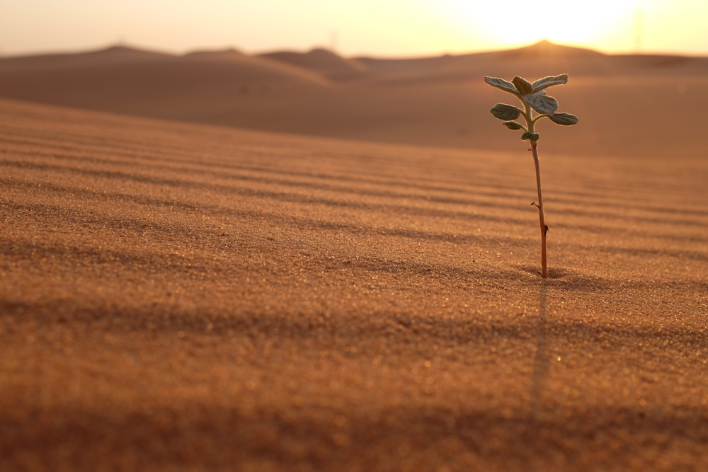 A plant on a desert landscape at sunrise(John Kevin)s