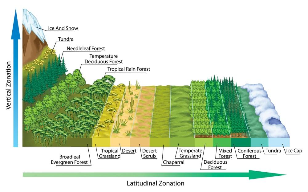 Altitudinal and latitudinal zonation of vegetation(stihii)s