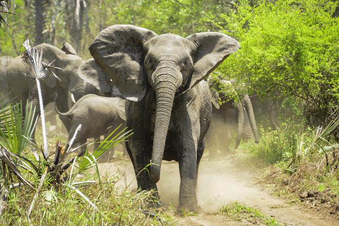 Angry Elephant( Walter Mario Stein)S