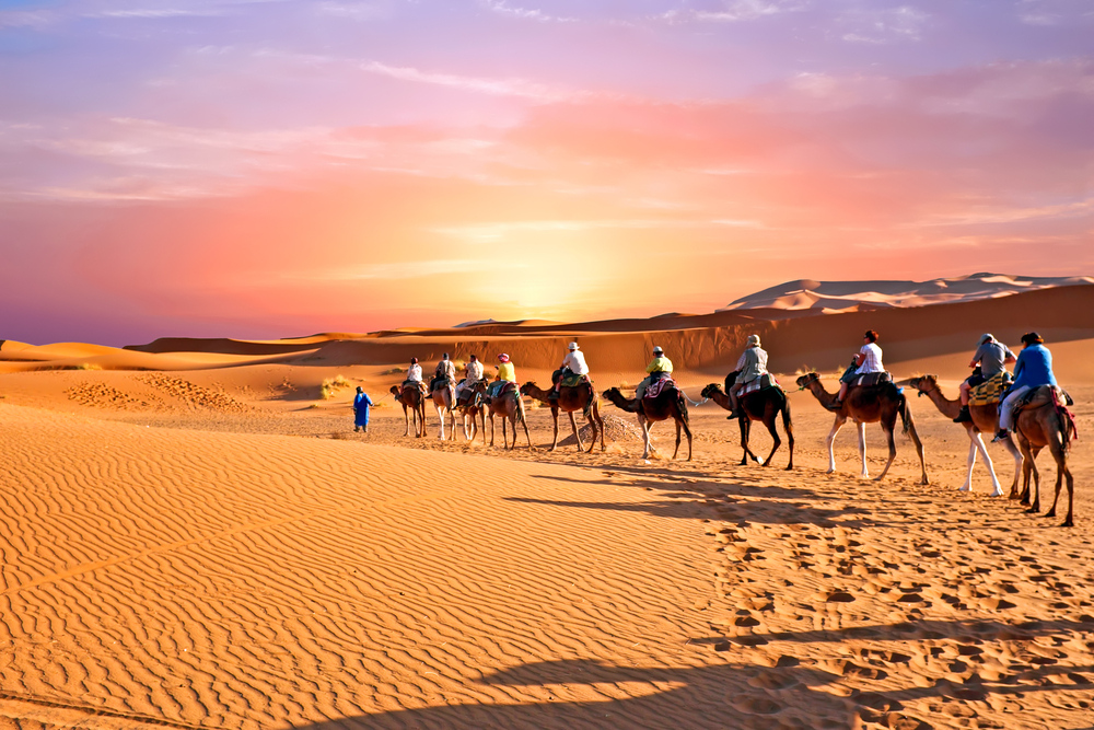 Camel caravan going through the sand dunes in the Sahara Desert, Morocco(Steve Photography)s