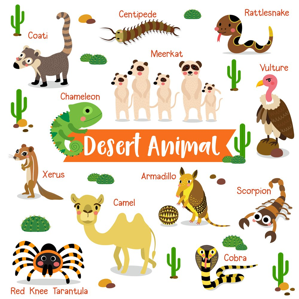 Desert creature cartoon on white background with animal name(natchapohn)s