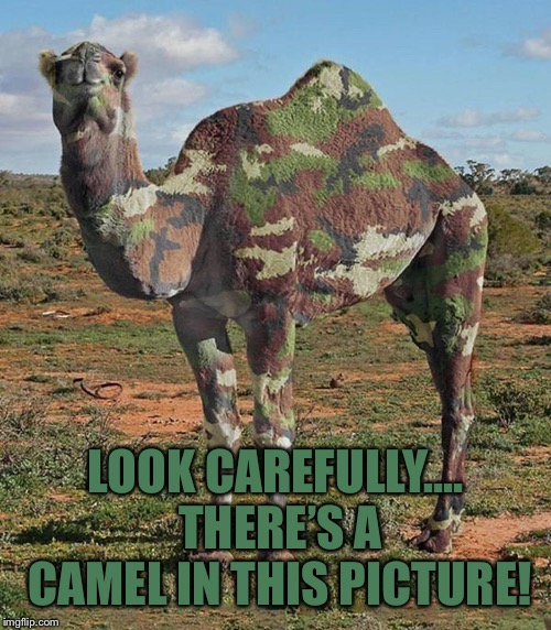 LOOK CAREFULLY.... THERE'S A CAMEL IN THIS PICTURE!
