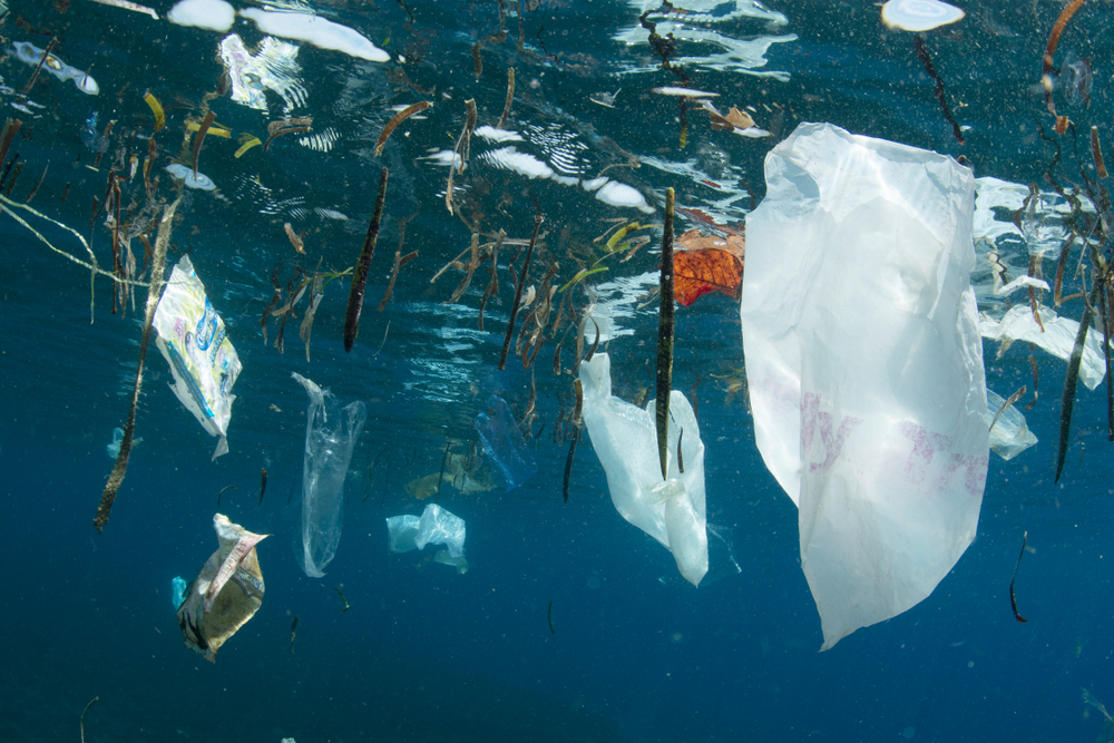 Plastic bags and other trash littered into the ocean( Shane Gross)s