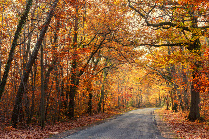 Road passing through a beautiful temperate forest at fall(Stephane Bidouze)S