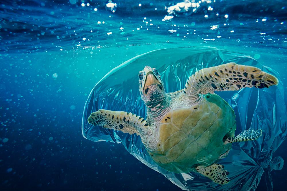 Sea turtle( Martina Badini)S