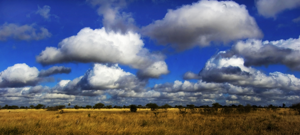 White cloud formations in a bright blue sky over the beautiful African savannah(Cobus Olivier)s