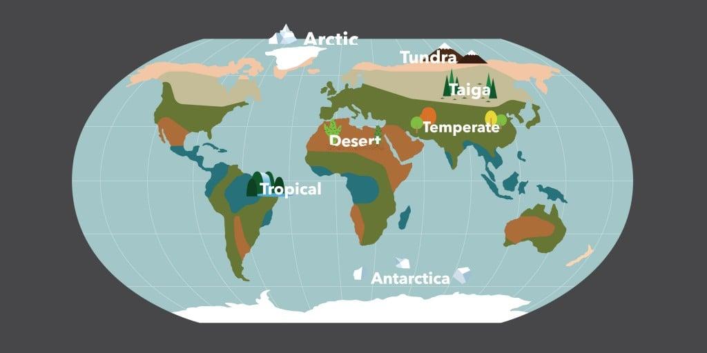 World map biome vector illustration(tom_tk)s