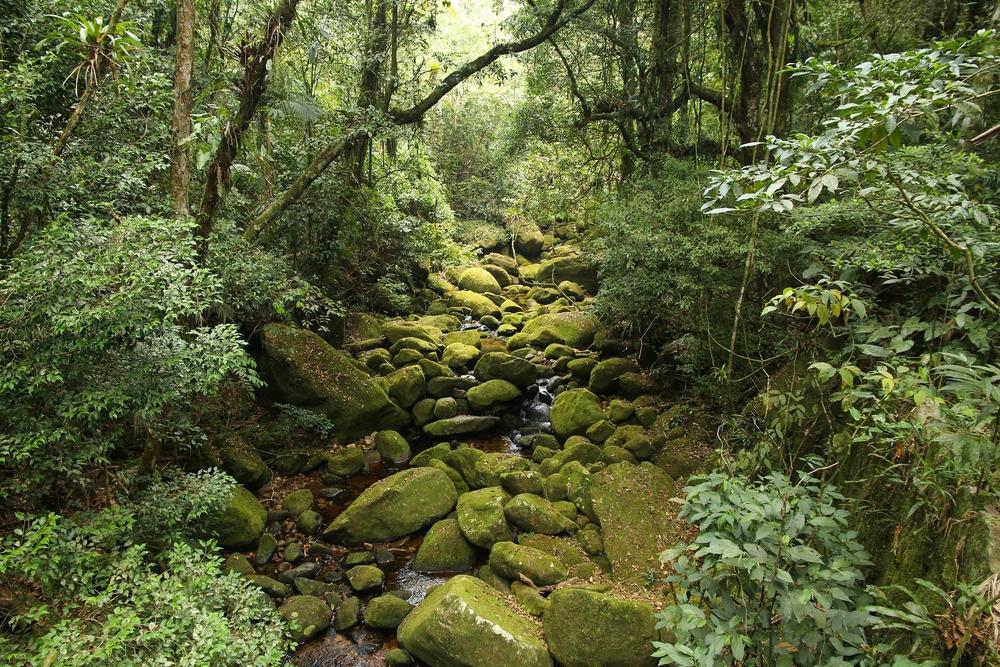 jungle view in Mata Atlantica(Tupungato)s