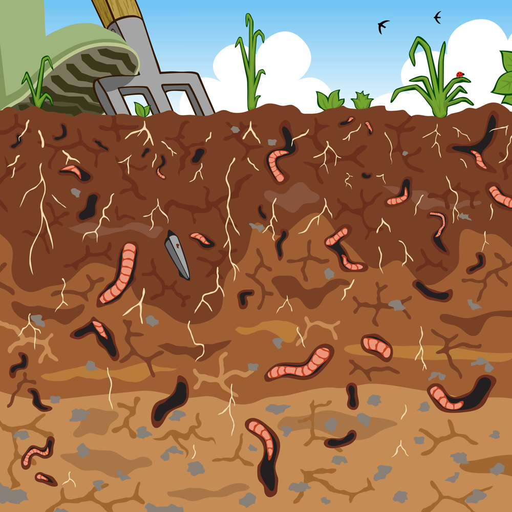 Editable vector illustration of earthworms in garden soil(Robert Adrian Hillman)s