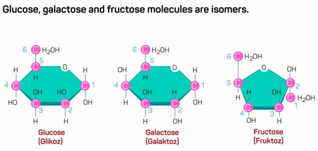 Glucose, galactose and fructose molecules