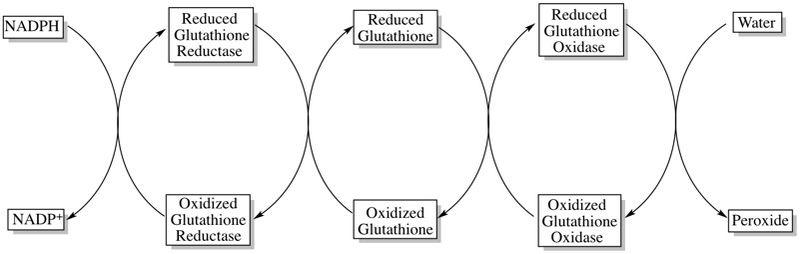 Gluthathione Reductase Graphic
