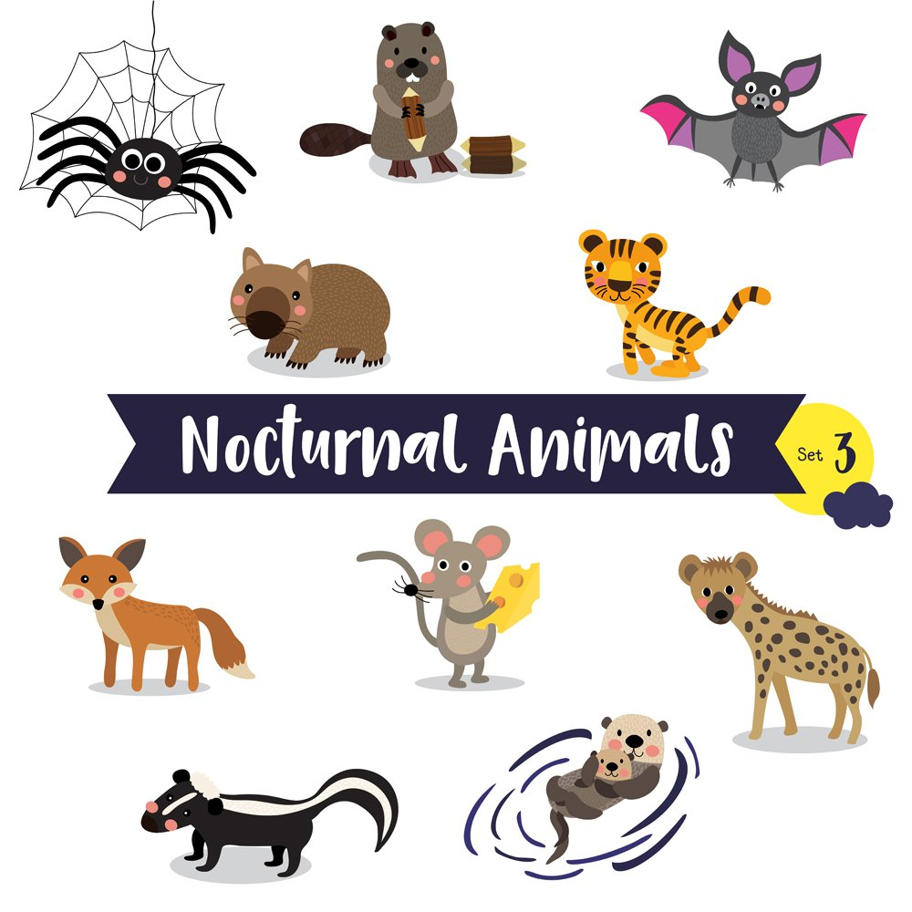 Nocturnal Animals cartoon(natchapohn)S