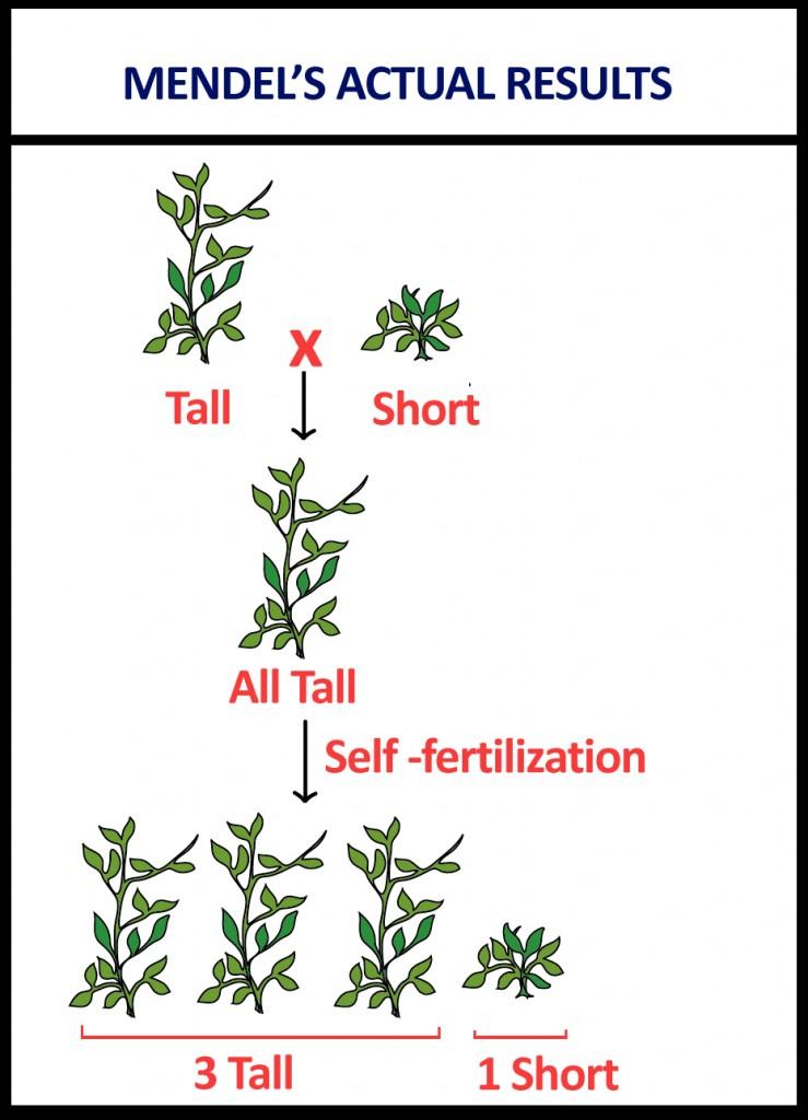 mandel's low diagram