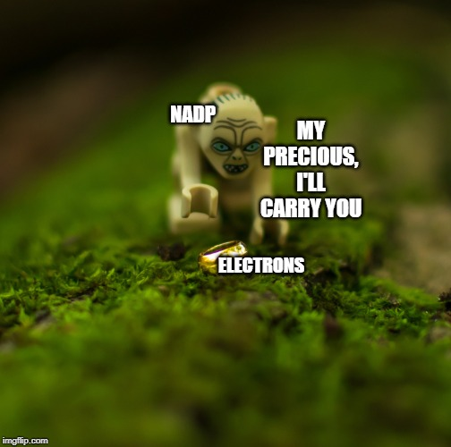 nadp and electrons meme