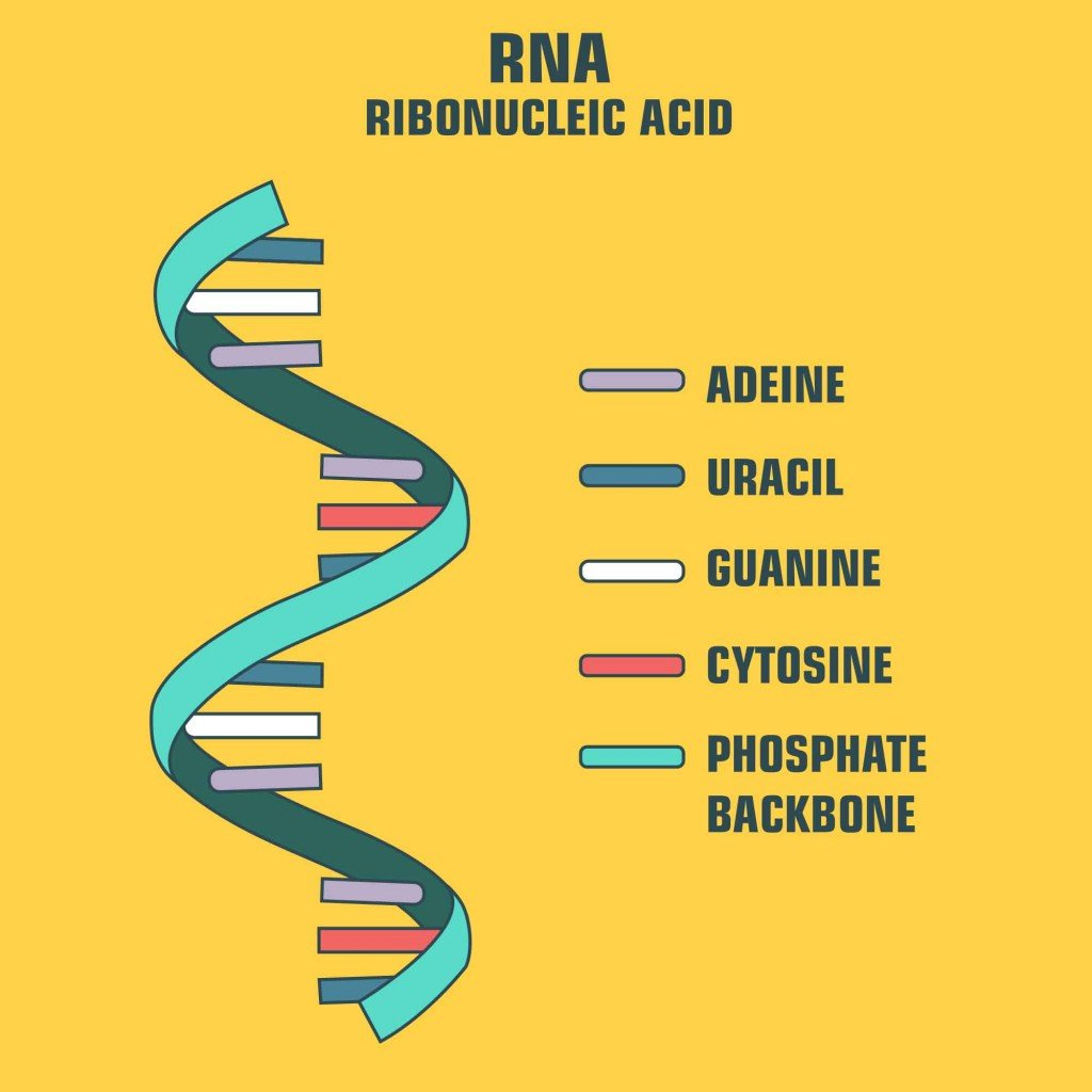 scientific icon spiral RNA(ShadeDesign)S