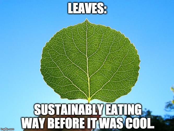 leaves: sustainably eating way before it was cool meme