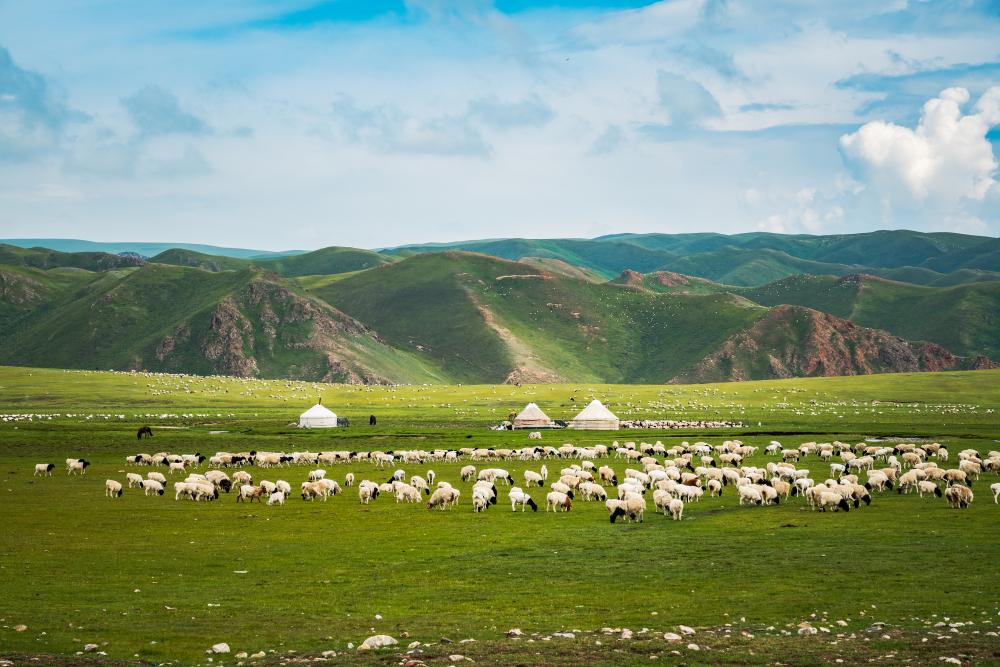 Bayanbulak grassland scenery in xinjiang, China(zhangyuqiu)s