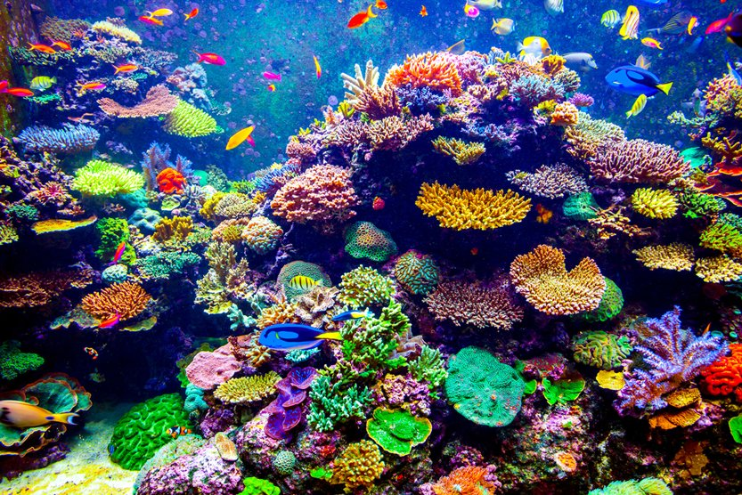Coral Reef and Tropical Fish in Sunlight(Volodymyr Goinyk)S