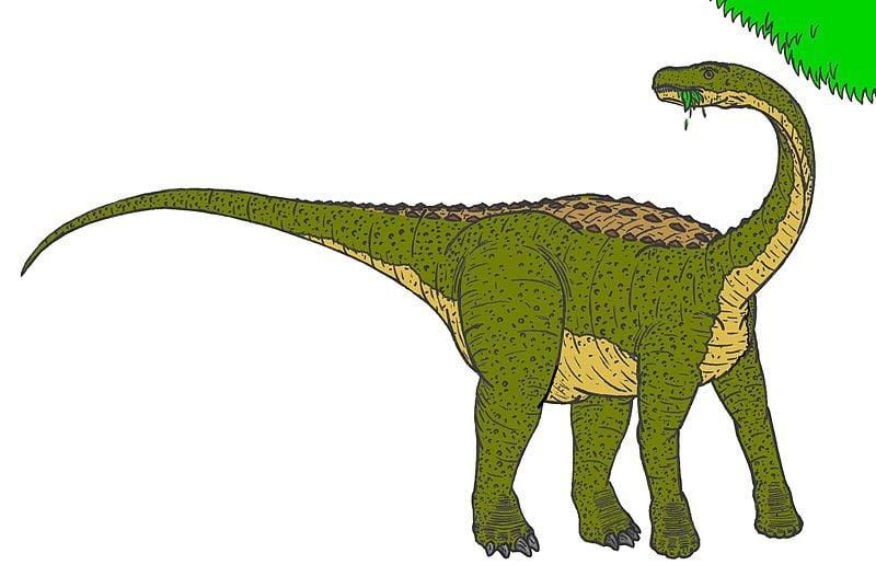 Magyarosaurus