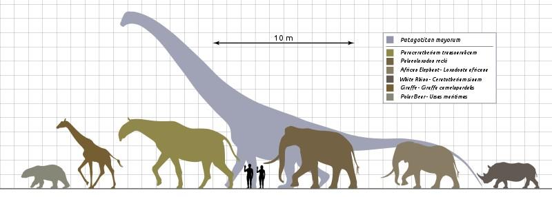 Patagotitan vs Mammals Scale