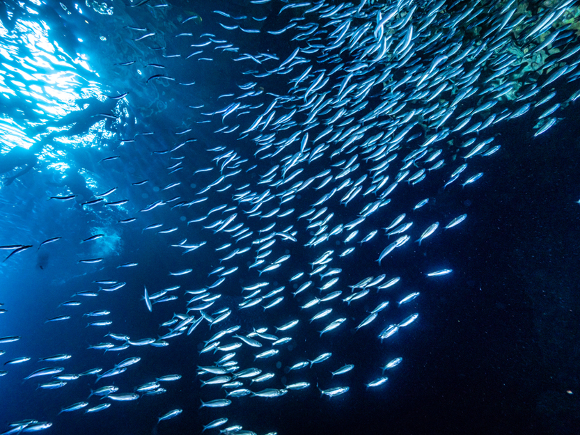 Shoal of small tiny fish in underwater cave against light rays from entrance(Willyam Bradberry)S