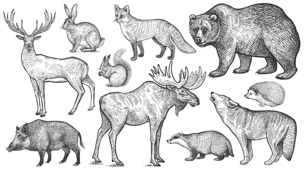 Wolf, badger, hedgehog, fox, moose, deer, bear, rabbit, squirrel, boar(mamita)s